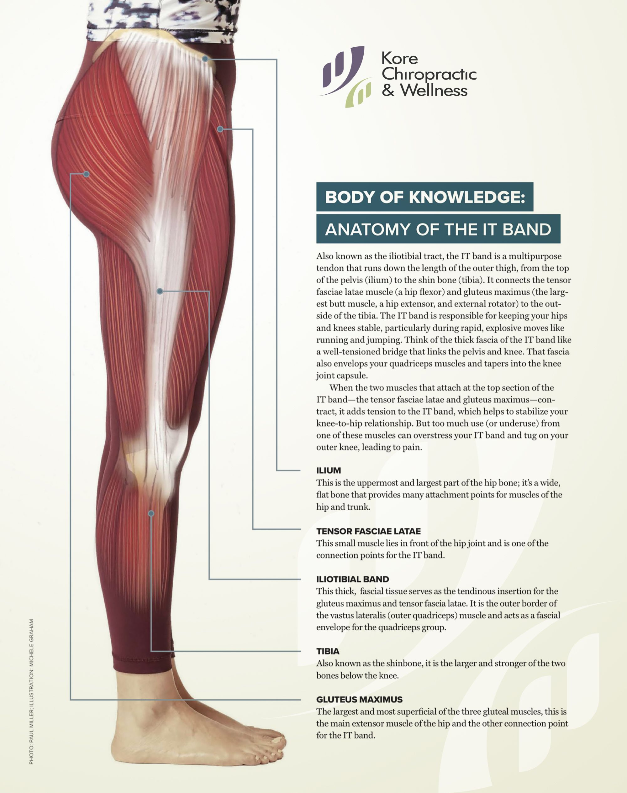 BODY OF KNOWLEDGE: ANATOMY OF THE IT BAND ♀ Also known as the ...
