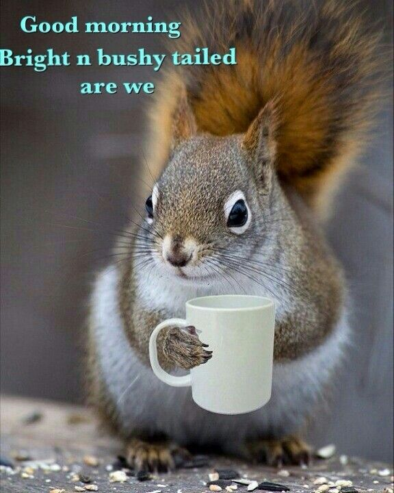 Good Morning You Made It : Good morning squirrels pinterest squirrel