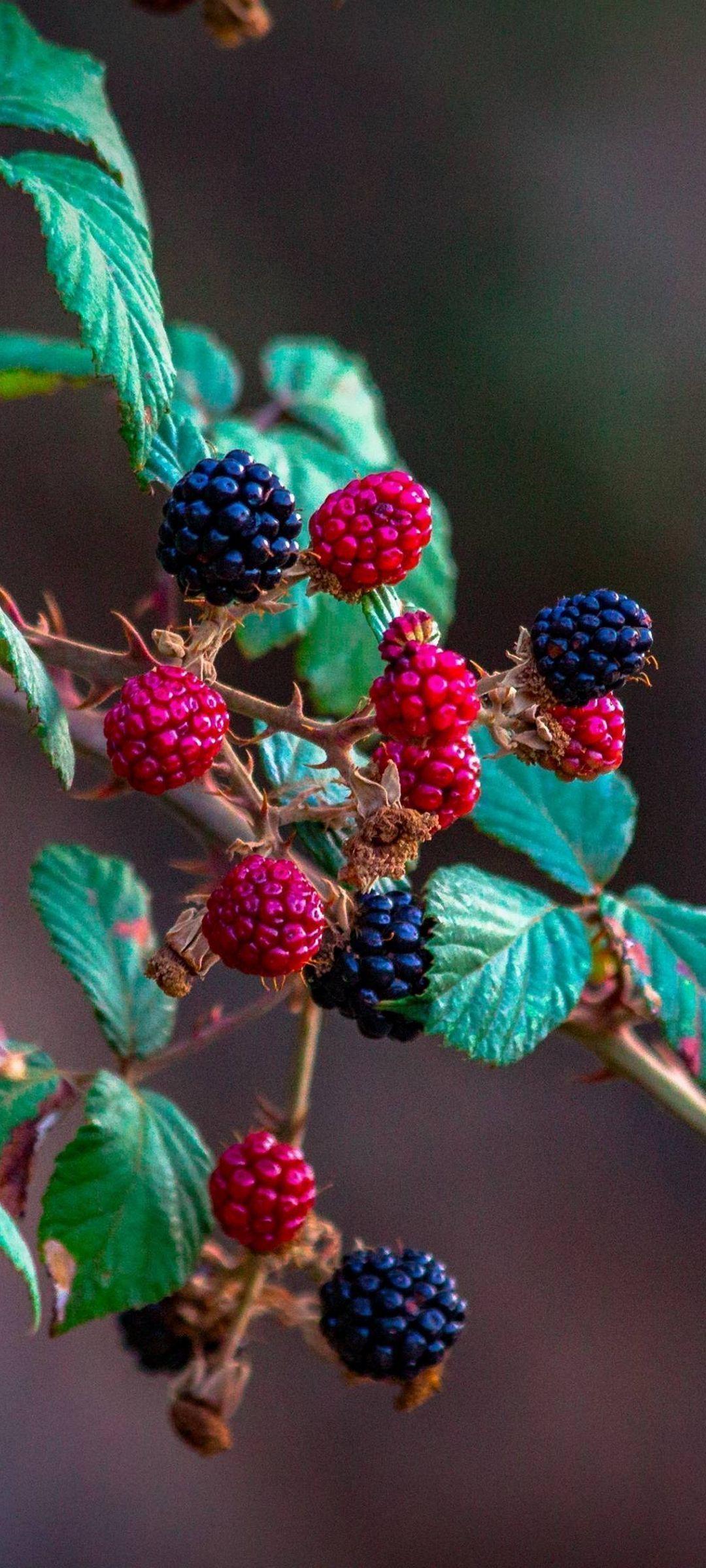 Fruits Raspberry Blackberry - [1080x2400] in 2020 | Wallpaper, Flower