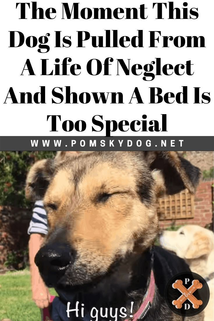 The Moment This Dog Is Pulled From A Life Of Neglect And Shown A