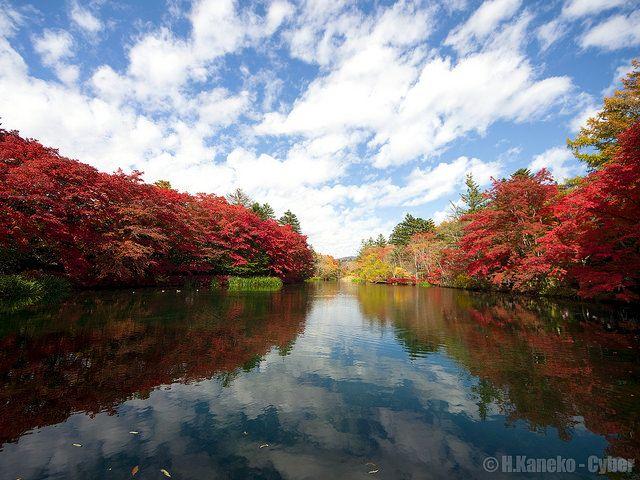 紅葉の雲場池 (Kumobaike pond in autumn)   池,雲,紅葉