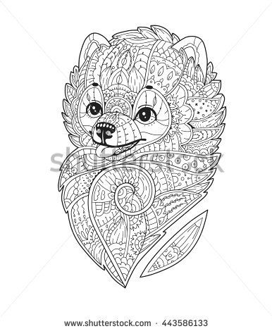 zentangle stylized purebred dog vector hand drawn pom pomeranian spitz adult antistress coloring