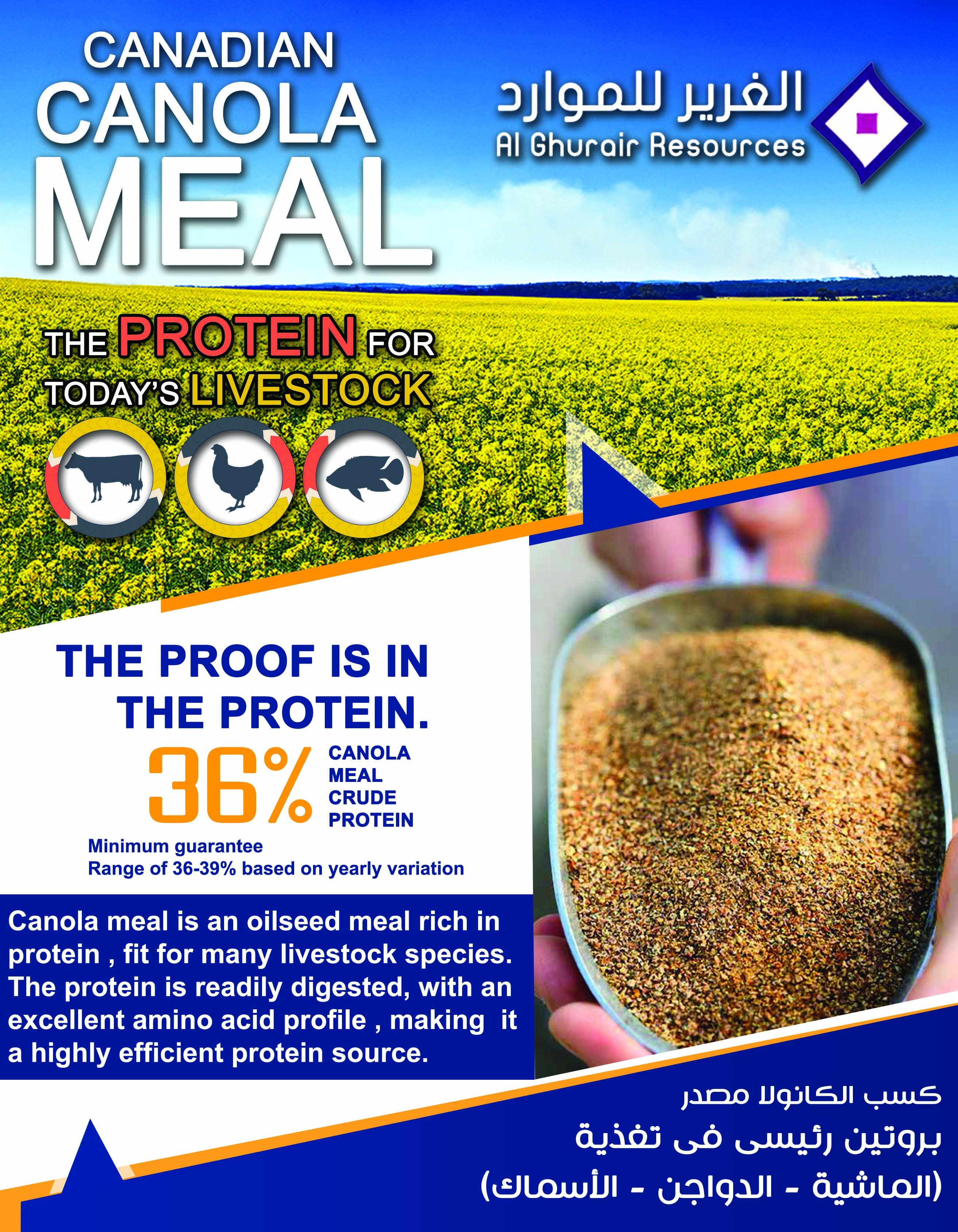 الغرير للموارد الوكيل الحصري Roots كسب الكانولا مصدر رئيسى فى تغذية الماشية الدواجن الاسماك تليفون Protein Rich Foods Rich In Protein Protein Foods