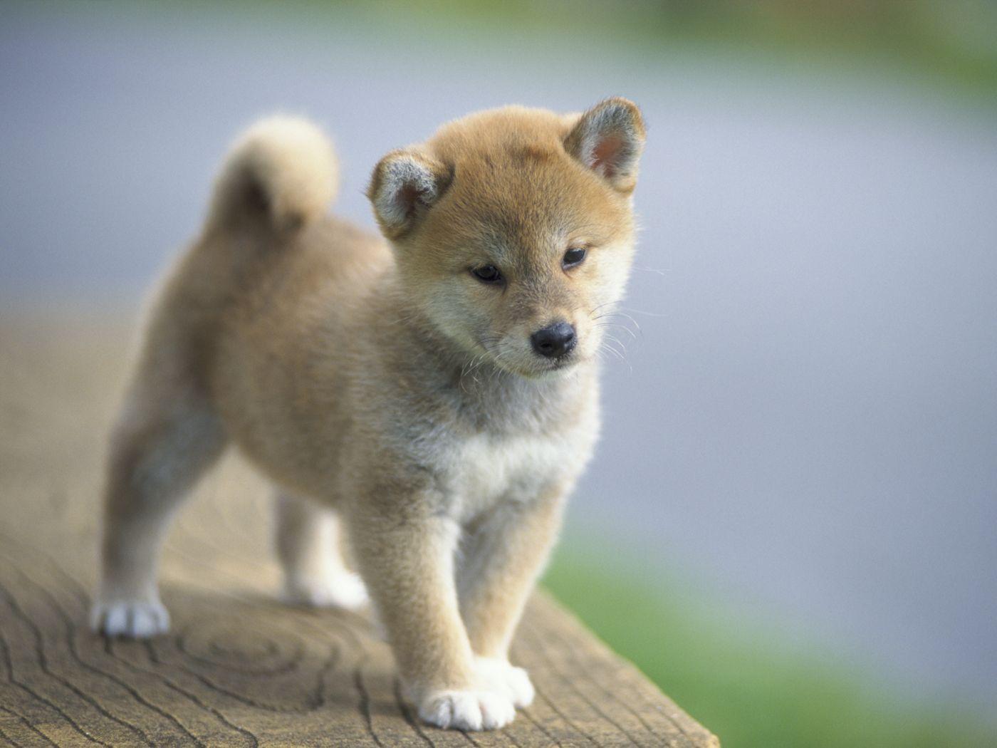 かわいい犬の壁紙 動物 かわいい犬の画像集 壁紙 動物 かわいい