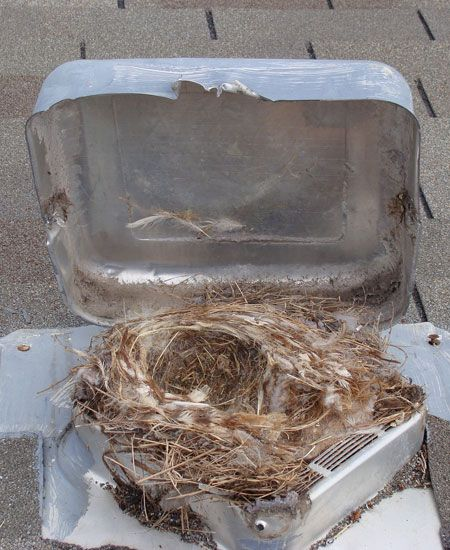 Is Your Dryer Vent On The Roof It Might Be A Fire Hazard Dryer Vent Clean Dryer Vent Roof Vents