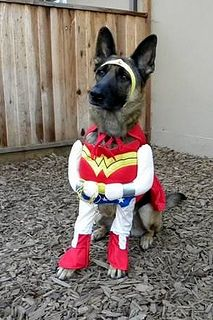 32366 4439183949970 1734742211 N Dog Halloween Costumes Pet