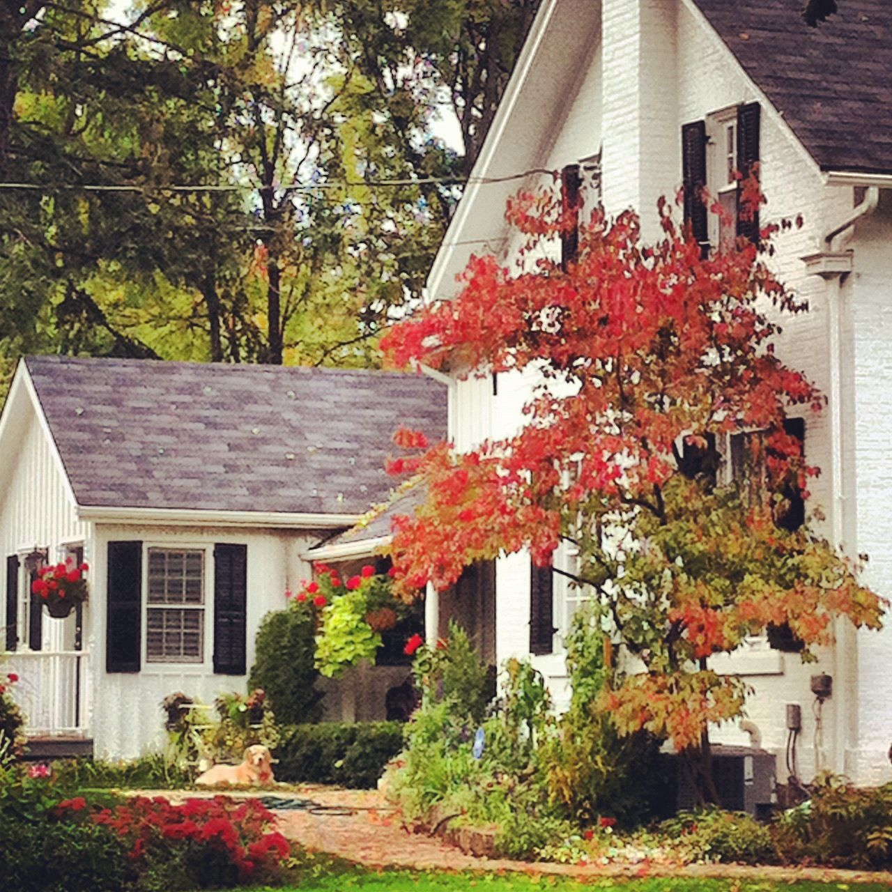 Country Home Exterior best 25+ country home exteriors ideas on pinterest | country house