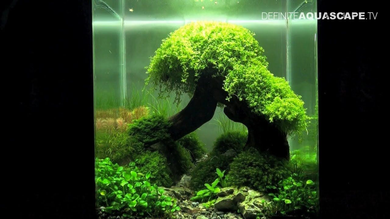 Small nano aquarium fish tank tropical - Tanks