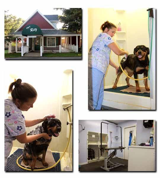 Professional Dog Grooming Near Brighton MI Dog grooming