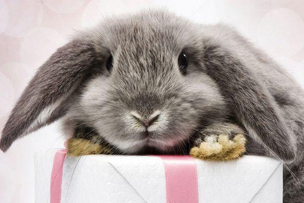 Kaninchen Hase Geburtstag Alles Gute Zum Geburtstag Bilder