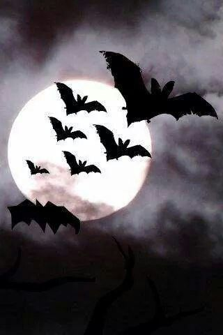Fledermaus / Bat #halloweenbackgroundswallpapers