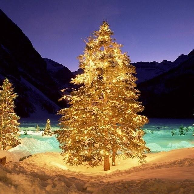 Fantastic Christmas Trees Ipad Mini Wallpapers 1024x1024 13 Ipad Nexus 7 Kindle Fire Hd Christmas Tree Wallpaper Christmas Wallpaper Christmas Tree Art