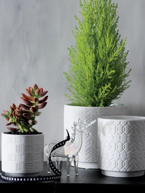 3Piece White Planter Set + Reviews White planters