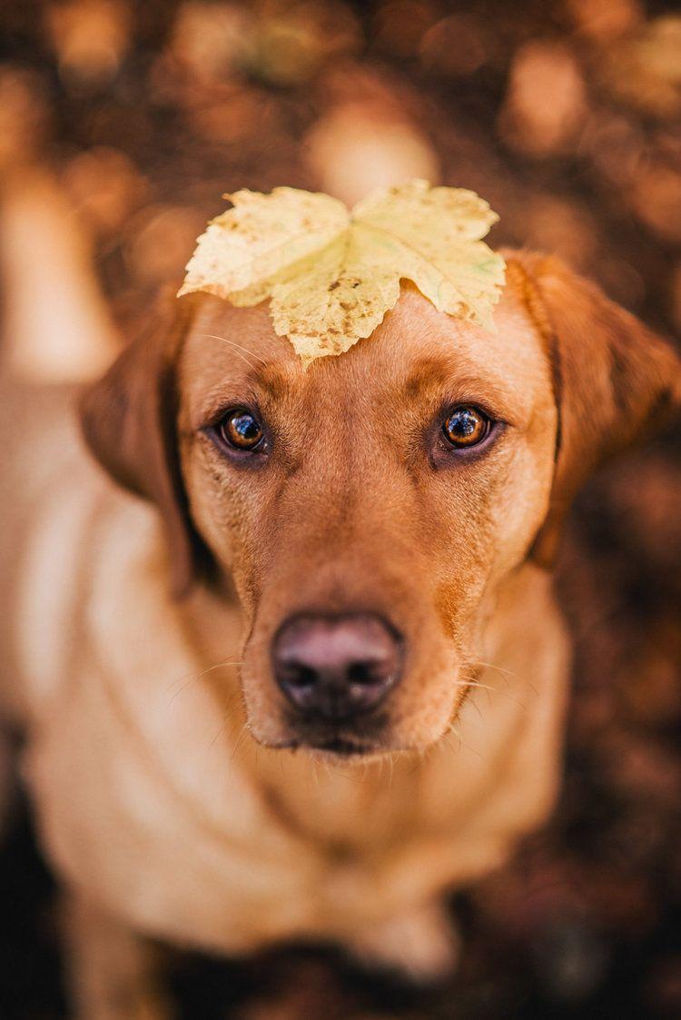 Photo of 6 free Lightroom presets for dog photography · Pfotentick Hundeblog