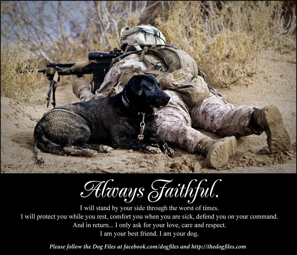 Watching Your Back Man And Dog Military Dogs Mans Best Friend