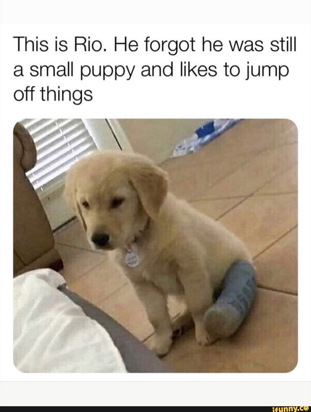 This Is Rio He Forgot He Was Still A Small Puppy And Likes To Jump Off Things Ifunny Baby Animals Funny Cute Animals Cute Baby Animals