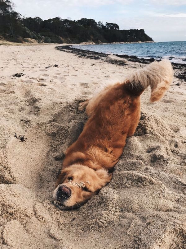 The Fine Art of Dogs (15 photos)