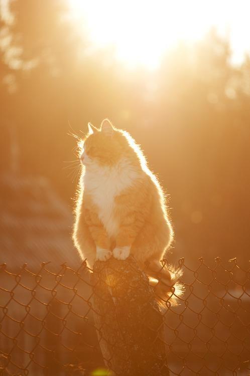 Waiting For Spring Animali Belli Gattini Gatti