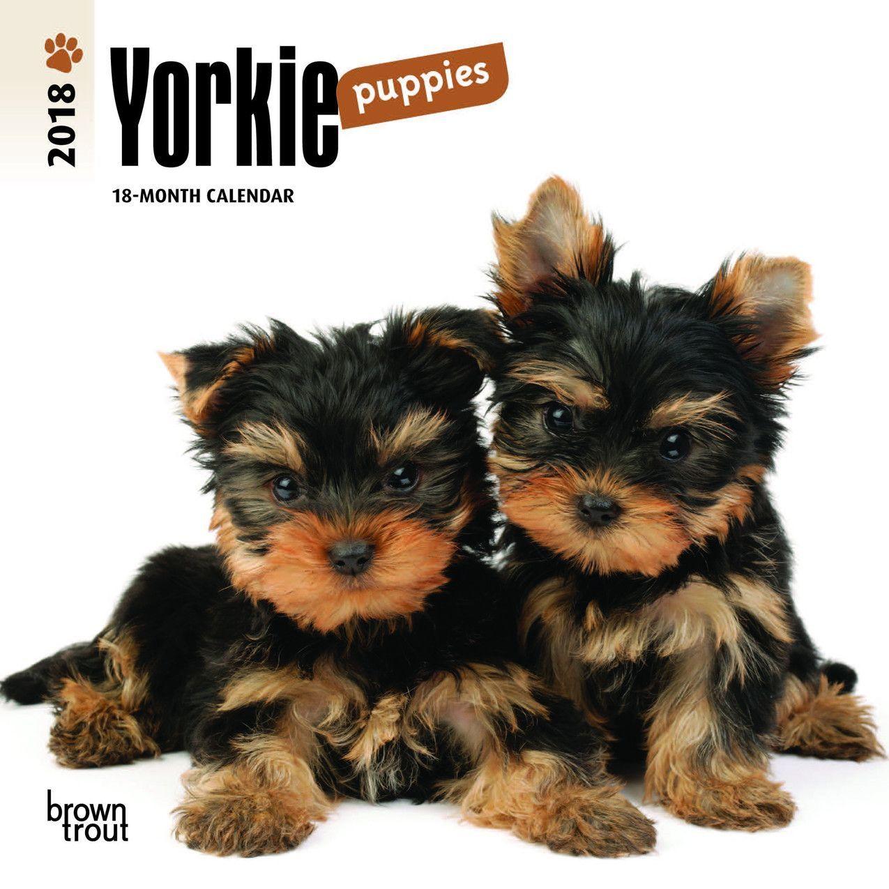Yorkie Puppies 2018 Mini Wall Calendar Terrier Puppies Yorkshire Terrier Yorkshire Terrier Puppies
