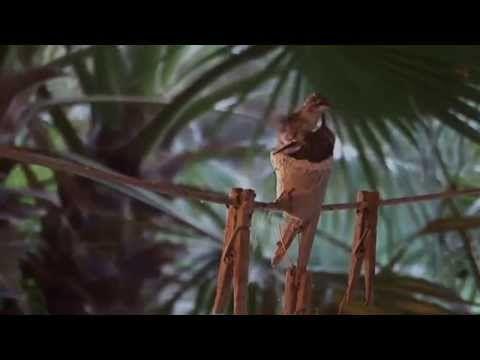 Hummingbird Nest, Eggs, Hatching - YouTube