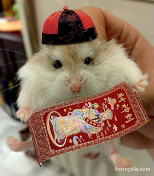 im a leo in the zodiac and a rat in the chinese zodiac - Chinese New Year 1984