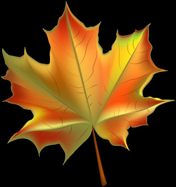 Autumn Leaf Transparent Png Maple Leaf Art Autumn Leaves Art Leaf Background