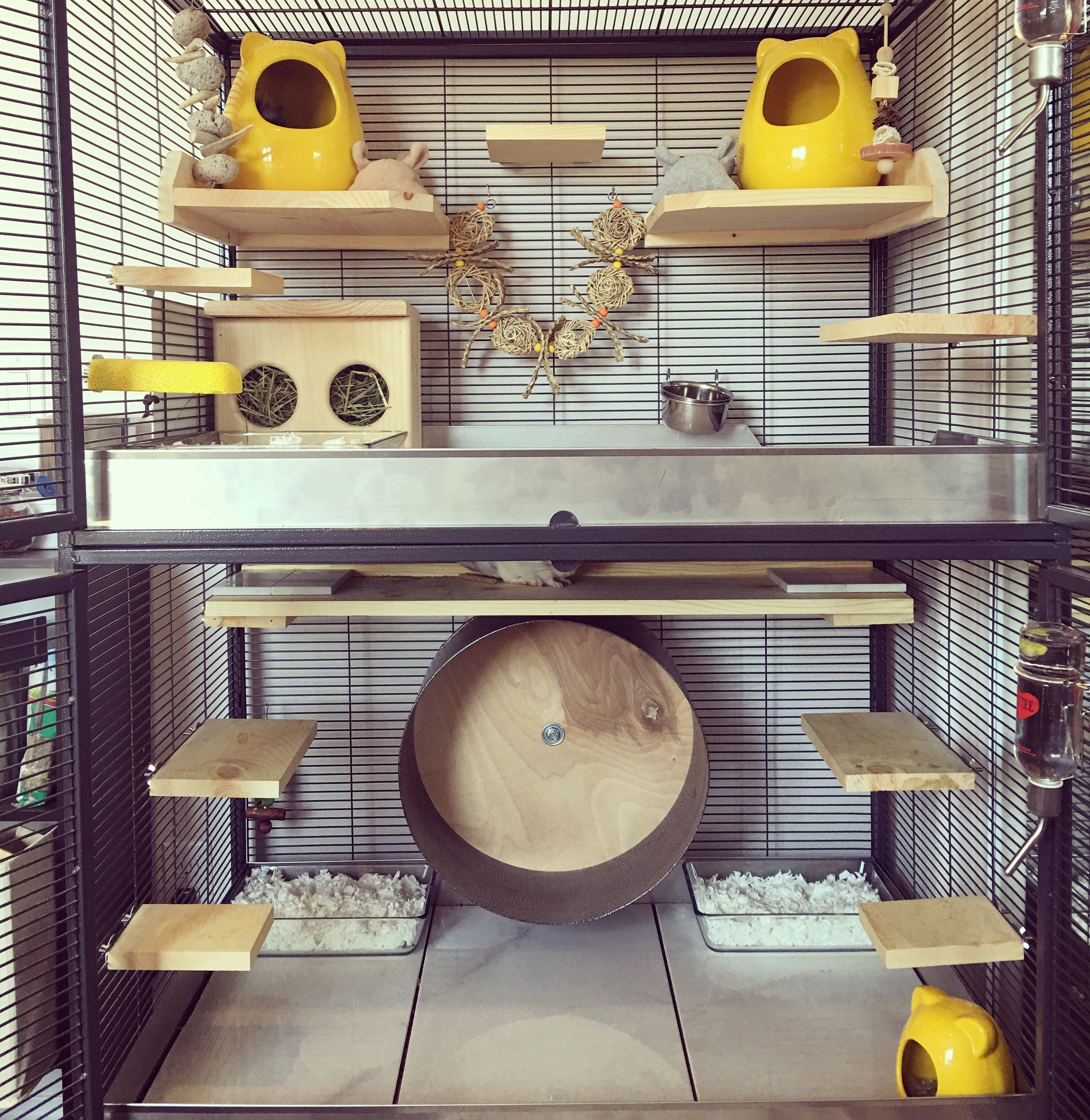 Chinchilla Cage Set Up By Candice Chinchillacage Ins
