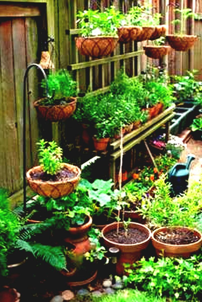 10 Small Patio Vegetable Garden Ideas Most Elegant And Also