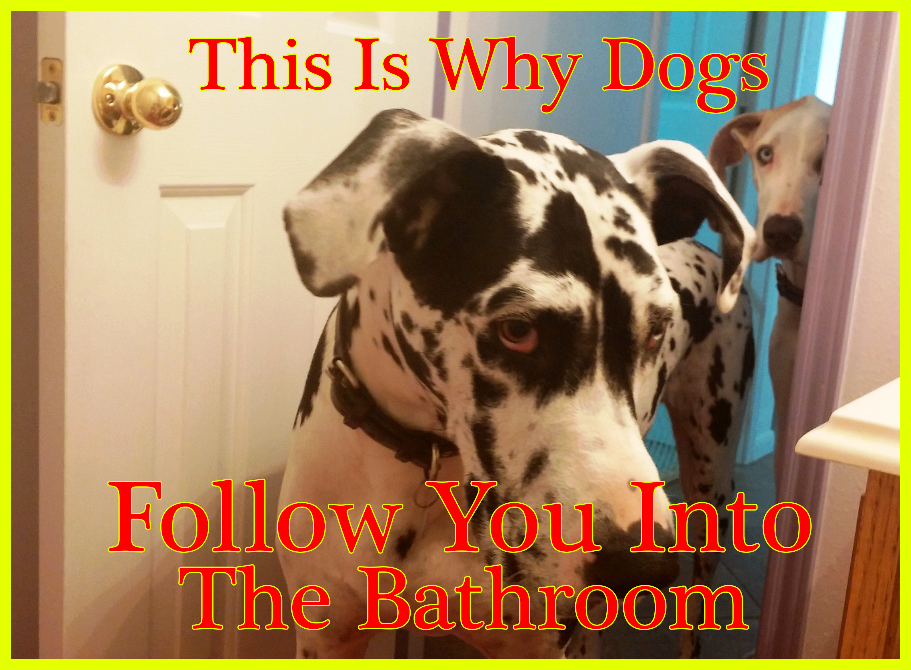 This Is Why Dogs Follow You Into The Bathroom I Never Knew This In 2020 Dogs Girls In Love Dog Health