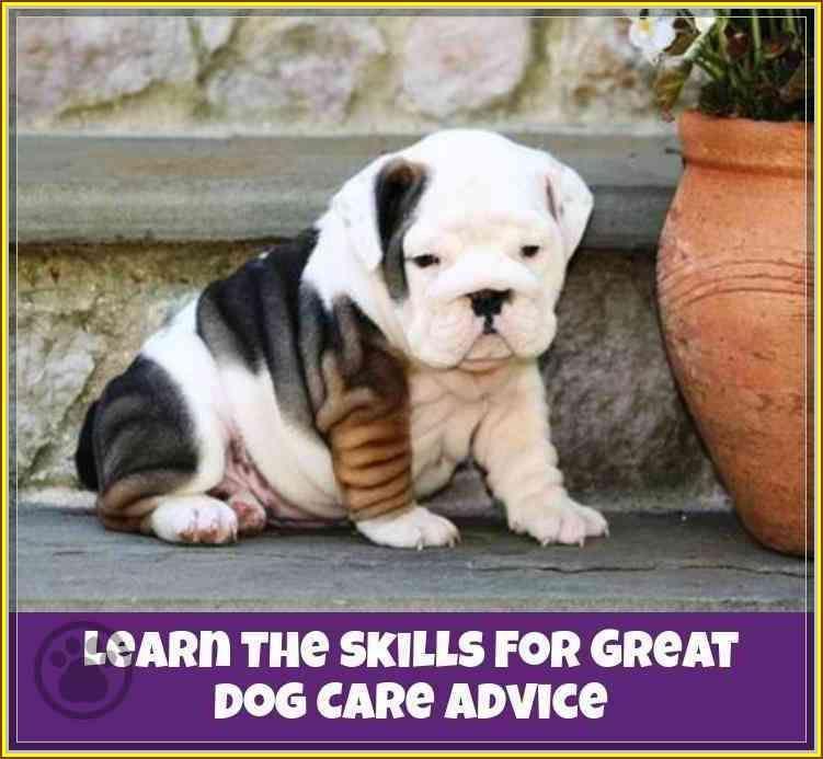 Pin On Dog Care Advice