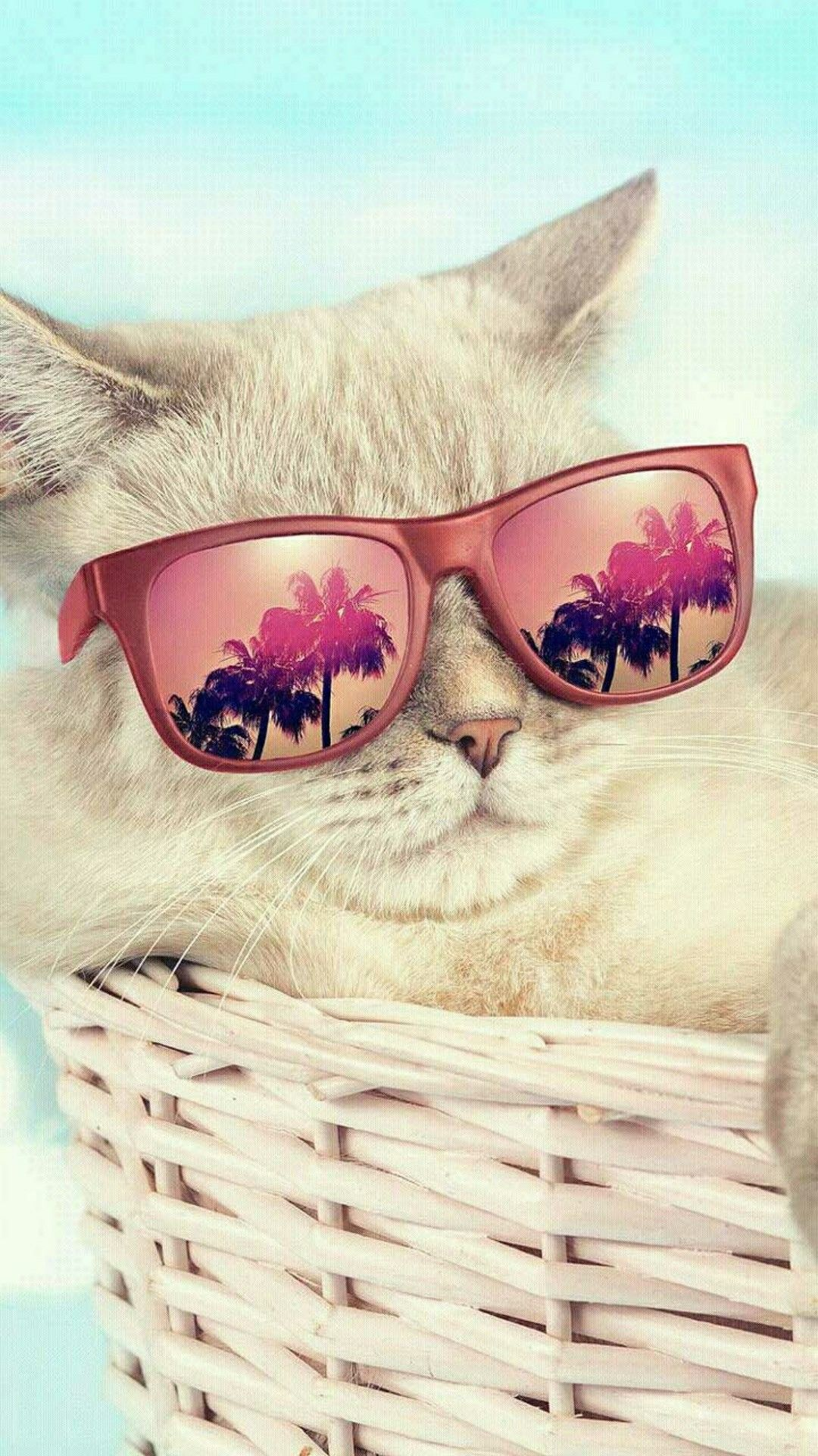 Cool cat (With images) Cute wallpapers, Animal wallpaper