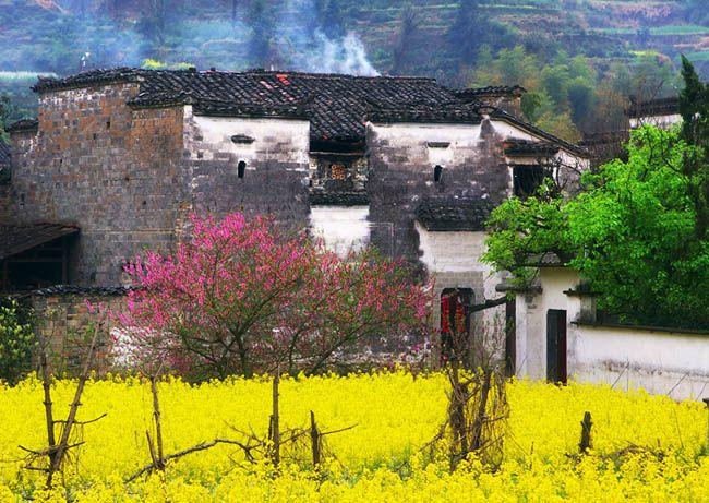 Spring in China 油菜花
