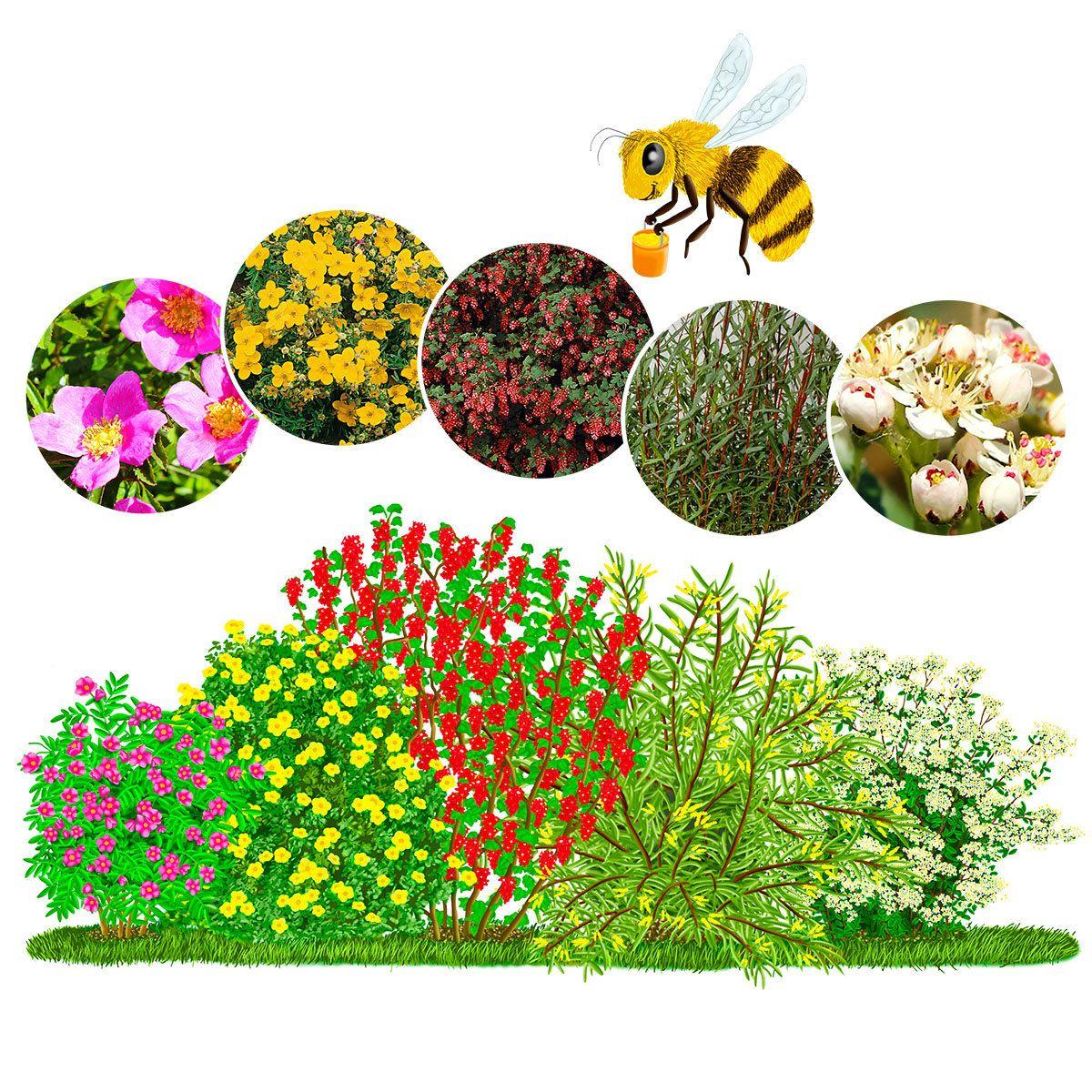 Pin Von Kathrin Wagner Auf Pflanzen: Gärtner Pötschkes Bienentankstelle