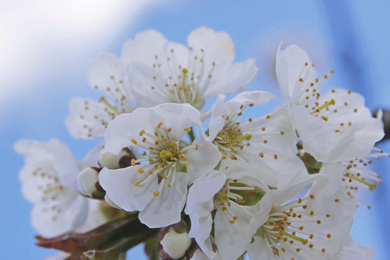 In Japanese There Is A Special Word Which Means To Picnic Under A Cherry Blossom Tree Hanami We Love Locci Cherry Blossom Tree Hanami Pretty Flowers