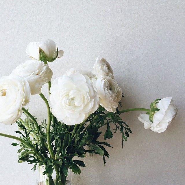 Blushed Darling | Andrea Burtea