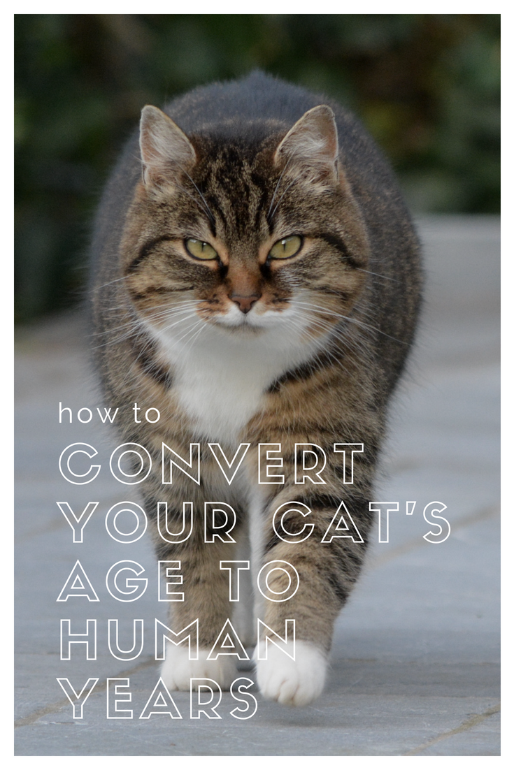 How to Convert Your Cat's Age to Human Years Cat ages