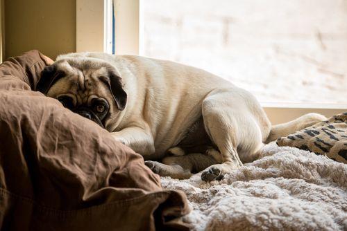 Shutterstock 211373611 Obstructivesleepapnea Remedies For Sleep