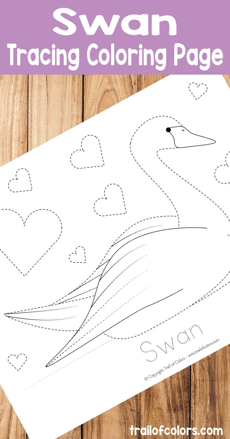 Swan tracing coloring page free printable must do crafts and