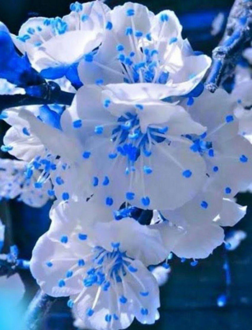 Картинки, открытки синий-белый