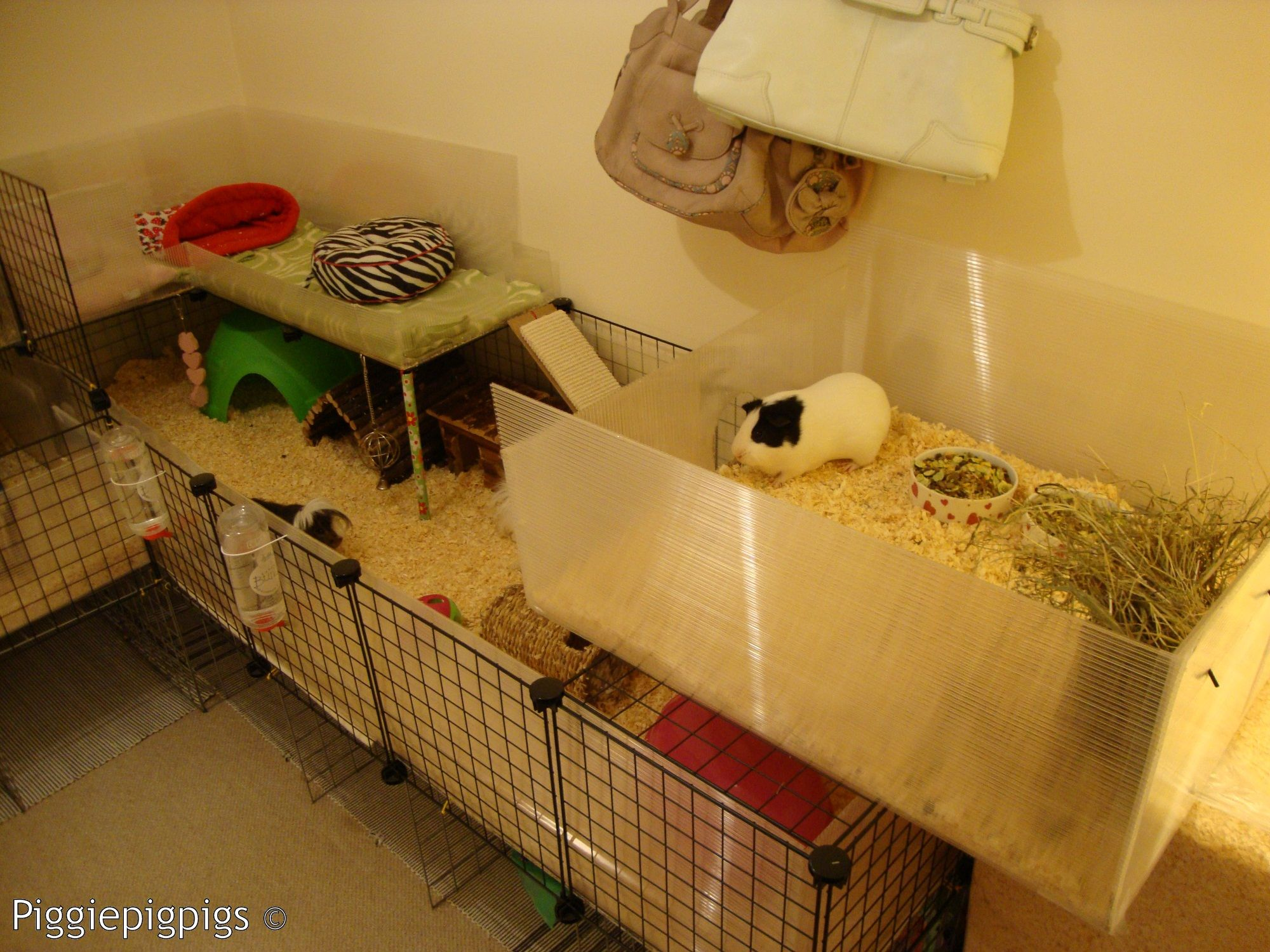 One of piggiepigpigs old c cages pets pinterest pet for 2 story guinea pig cages for sale