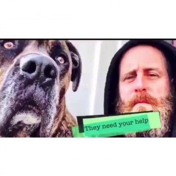 HELP ELWOOD - http://DAILYSKATETUBE.COM/help-elwood/ - Please Donate ( gofundme.com/elwoodsurgery) & Share this 15 second clip to the world to get Elwood back running & swimming in the ocean.-Thank You  edit by:  Jacob HammondCast: True Skateboard Mag Source: https://vimeo.com/132592687 - ELWOOD, Help