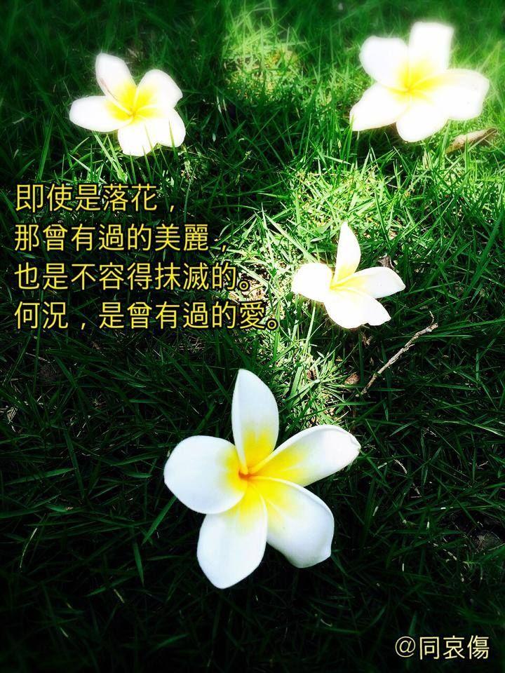 即使是落花,那曾有過的美麗,也是不容得抹滅的。何況,是曾有過的愛。 | Chinese quotes, Morning quotes, Poster
