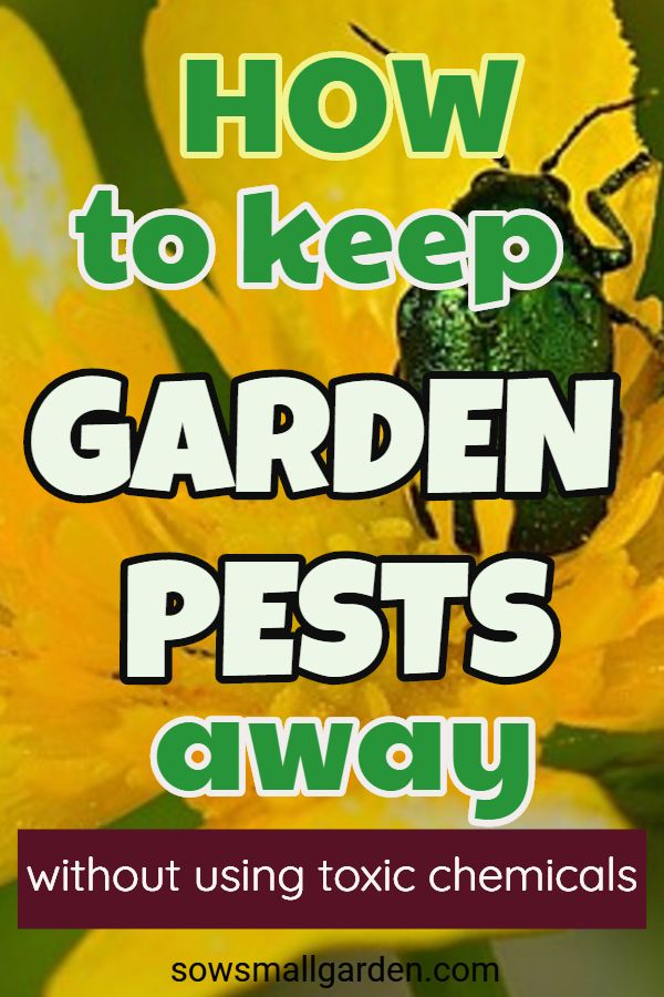 Photo of How to keep garden pests away