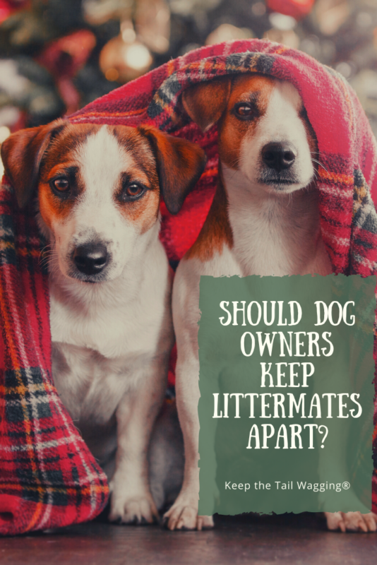 Should Dog Owners Keep Their Littermates Apart Keep The Tail Wagging In 2020 Dogs Dog Owners Dog Care