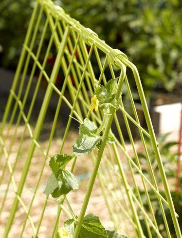 Deluxe Cucumber Trellis Gardener S Supply With Images