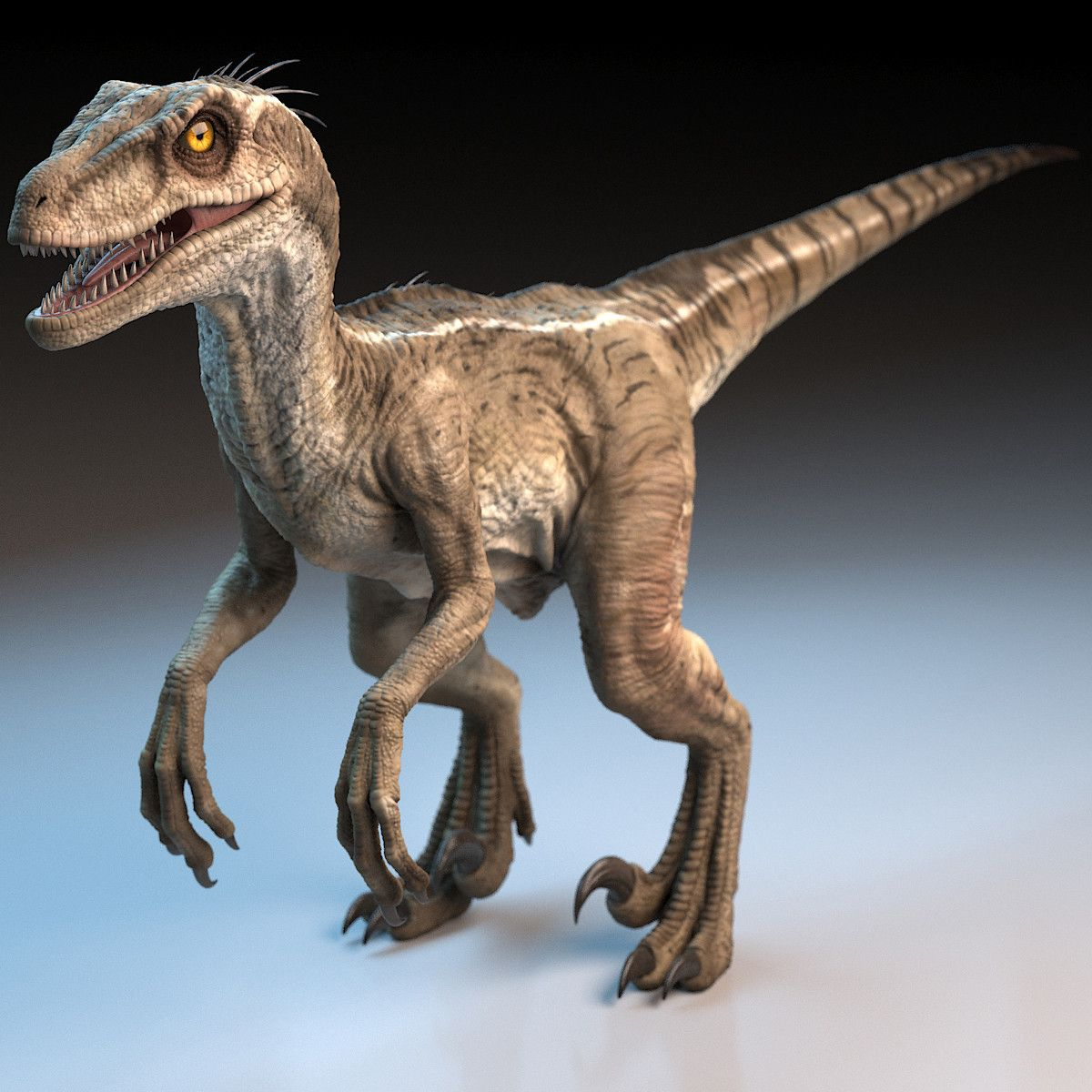 Raptor Dinosaur 3d Model Raptor Dinosaur Dinosaur Pictures Dinosaur Images
