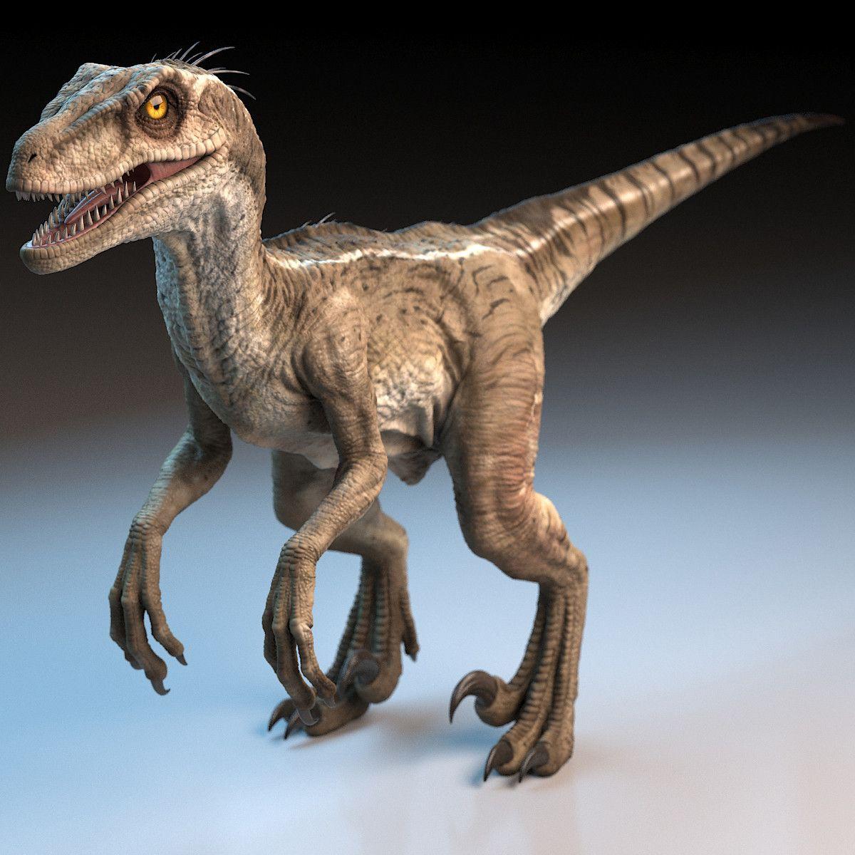 raptor dinosaur 3d model Raptor dinosaur, Dinosaur