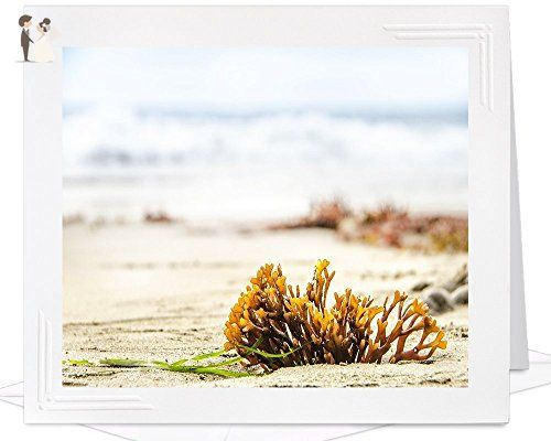 Blank greeting card of beach seaweed frameable metallic photo blank greeting card of beach seaweed frameable metallic photo wedding thank you cards amazon partner link m4hsunfo