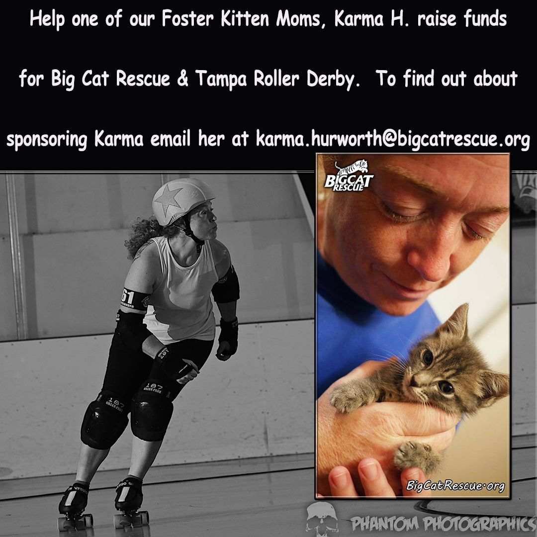 Sentencing Statement Big cat rescue, Cat rescue, Kitten mom