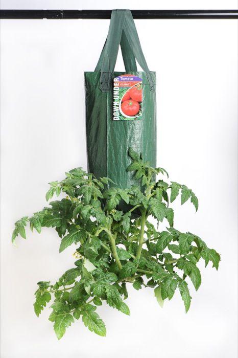 Celebrity Tomato Organic Herbs Varieties Of Tomatoes Herbs 400 x 300
